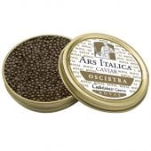 Calvisius: Oscietra Original Royal Caviar 1000g